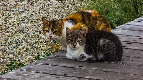 Pareja de gatos mirando fijo