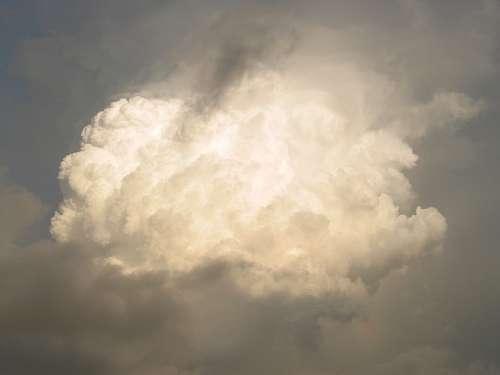 cumulus limbus