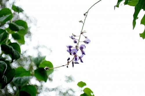 hoja, flor, flores, naturaleza, lila, vista de fre