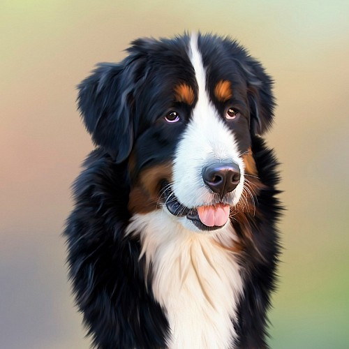 imágenes gratis Dibujo realista de perro Boyero de Berna