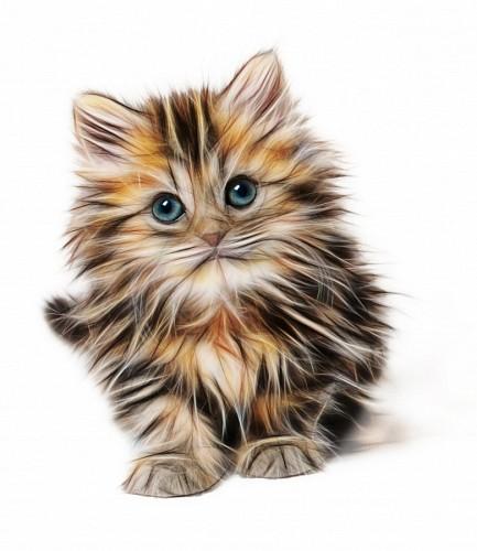 DIbujo 3d de gato para fondo de pantalla