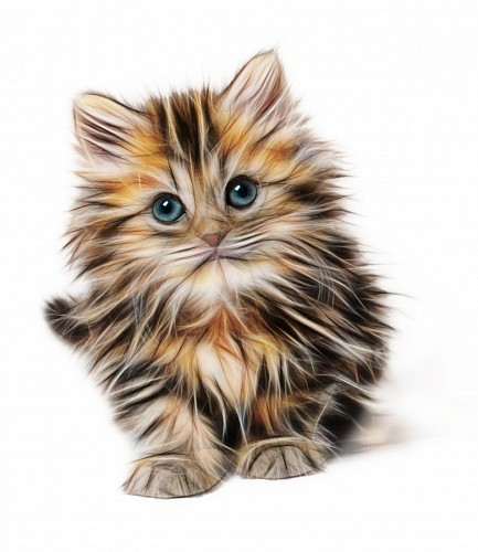 imágenes gratis DIbujo 3d de gato para fondo de pantalla
