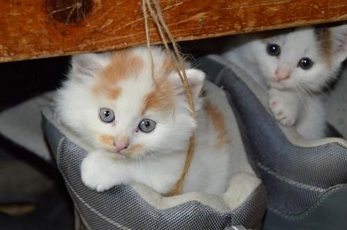 imágenes gratis Tiernos gatitos dentro de los zapatos