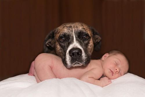 Adorable mascota posando junto al bebe recien nacido
