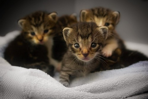 Crias recien nacidos de gato