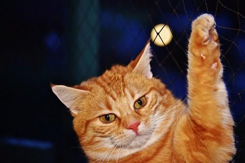 Gatito con cara de enojo colgado del alambrado a la luz de la luna
