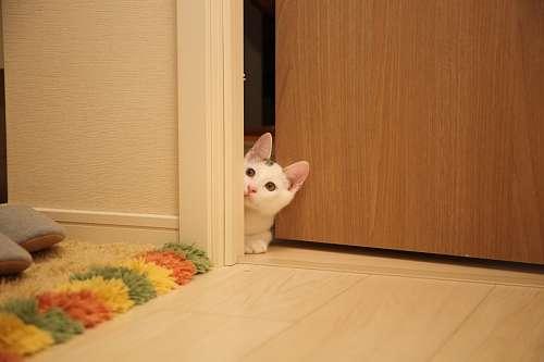 gatito curioso en la puerta