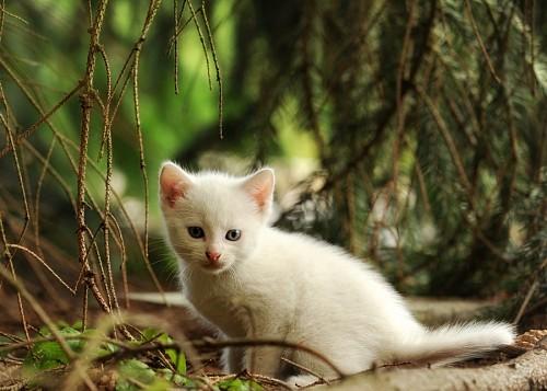 imágenes gratis Tierna mascota bebé en el bosque