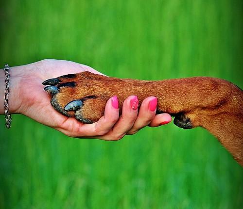 Mujer tomando la pata de su mascota