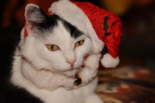 imágenes gratis Gatito navideño