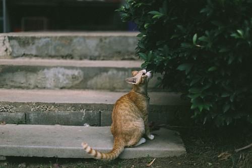 Tranquilo gato oliendo hojas de arbol