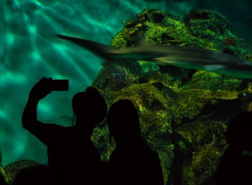 imágenes gratis Selfie en el acuario