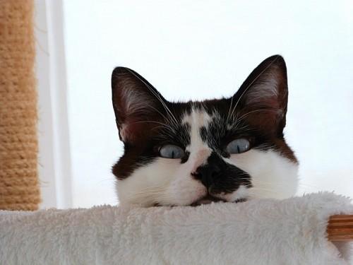 imágenes gratis Divertido gato blanco y negro detrás del sofá