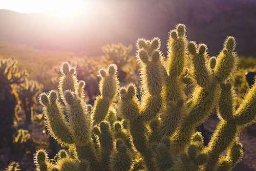 imágenes gratis Cactus en el desierto