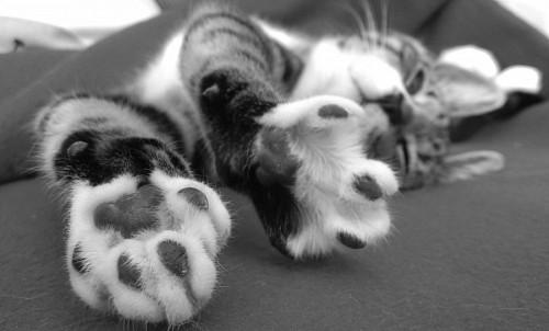 Patas de gato en blanco y negro