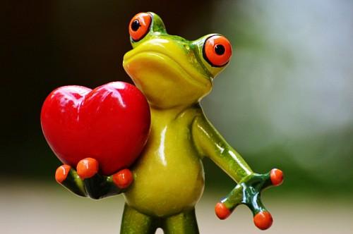 imagenes de amor tiernas para celular de Sapito enamorado