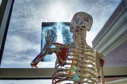 imágenes gratis radiografia