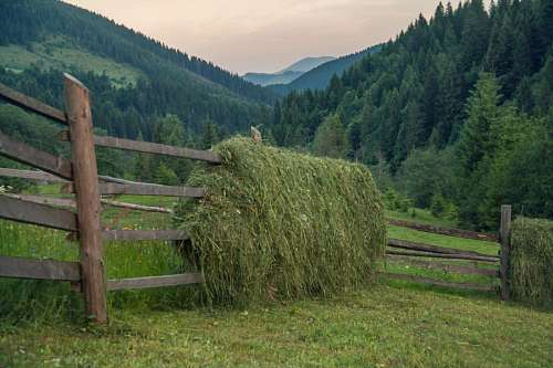 imágenes gratis Europa, Europe, Ucrania, campo, farm, field, granj