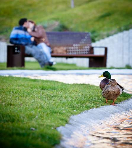 Jovenes sentados en banco amandose