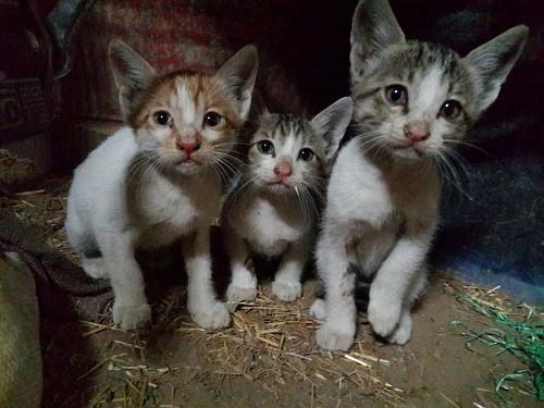 Gatitos abandonados en la calle