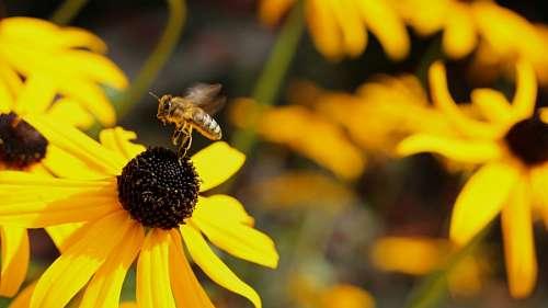 imágenes gratis abeja