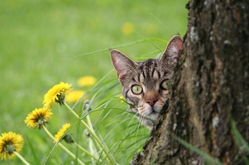 Gatito asomado por detras del arbol