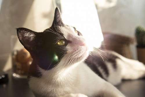 Gato descansando con rayo de sol