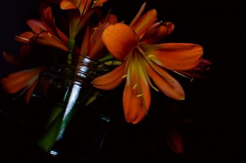 Flores artificiales Naranja sobre fondo negro