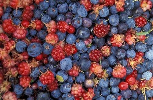 imágenes gratis Frutos Rojos