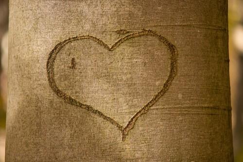 Corazón tallado en árbol