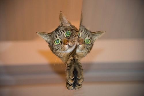 Gato travieso detrás del espejo