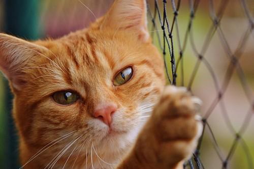 Gato jugueton trepando el alambrado