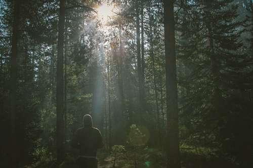 imágenes gratis Hombre en el Bosque