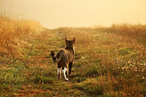 imágenes gratis Gato observando al horizonte en un campo