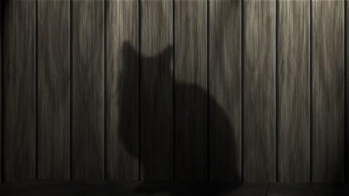 imágenes gratis Sombra felina