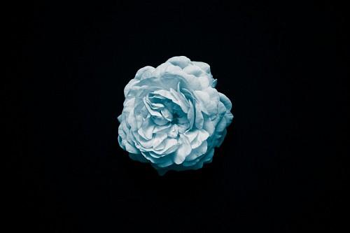 Fondo de pantalla flor celeste