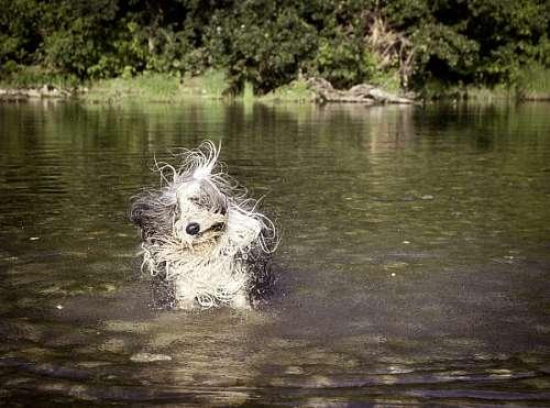 Perro secandose