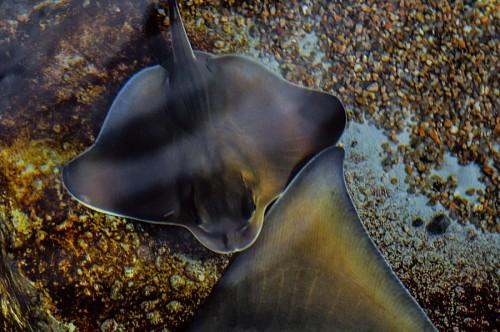 imágenes gratis Chuco en el acuario