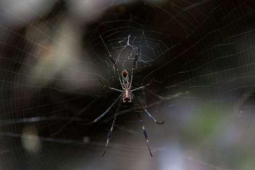 insecto, araa, tela araa, foco selectivo, uno, nat