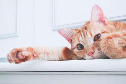 descargar fondos de pantalla de gatitos bebes