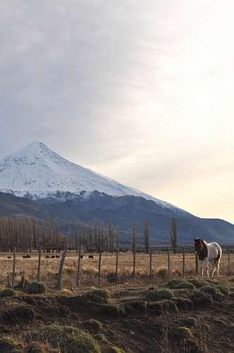 imágenes gratis patagonia, neuquen, volcan, lanin, nieve, paisaje,