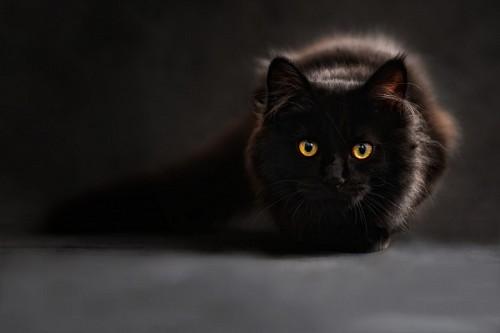 Hermoso gato negro de mirada penetrante para fondo de pantalla