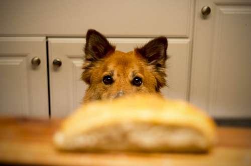 Perro deseando comida