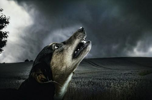 Pequeño perro mestizo aullando al anochecer