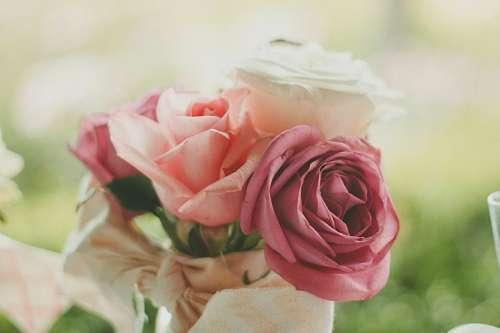 Ramo de Rosas dia de los enamorados