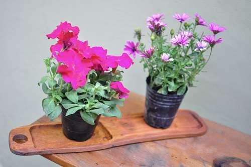 imágenes gratis Flores de jardín