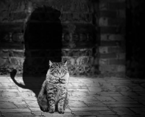 imágenes gratis Adorable gato reflejándose como un león
