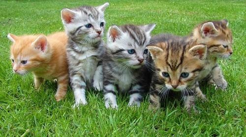 Manada de gatitos sobre el cesped