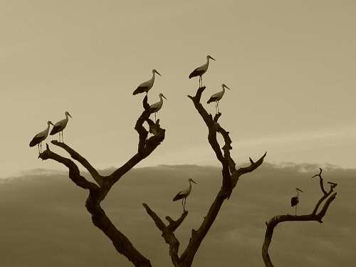 imágenes gratis Aves