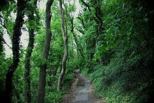 imágenes gratis Caminio en la Selva